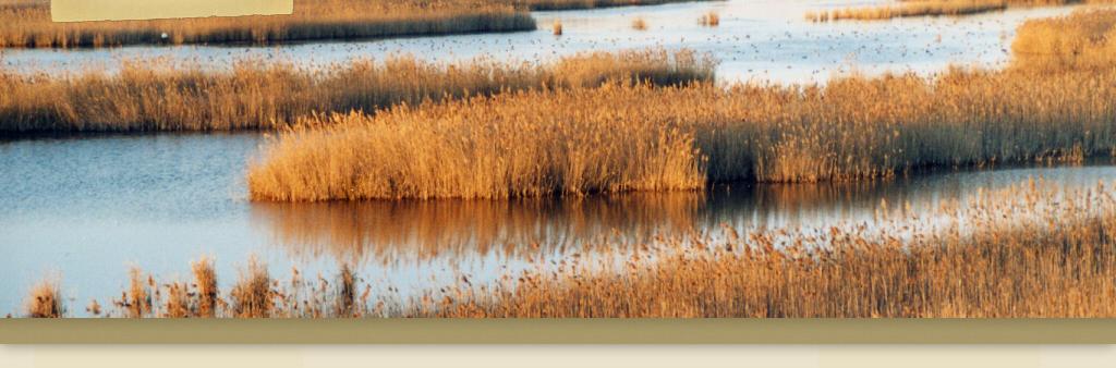 termini e condizioni di incontri di oasi